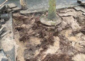 Boomwortels vrijmaken - Methorst Zuigtechniek